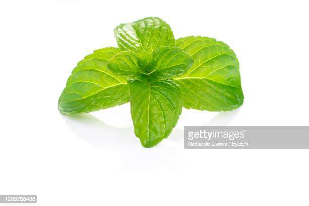 sprig of fresh mint, freshly picked and placed on a white table - mint leaf culinary stock pictures, royalty-free photos & images