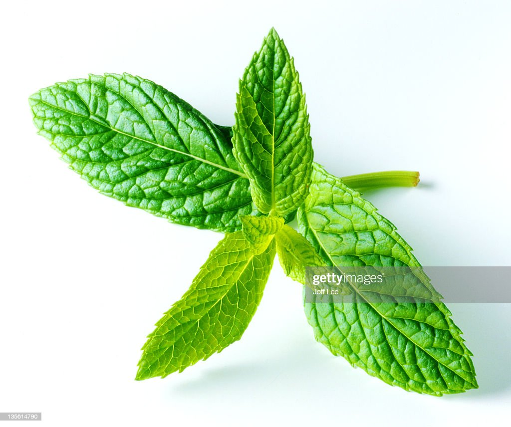 Sprig of fresh mint : Stock Photo
