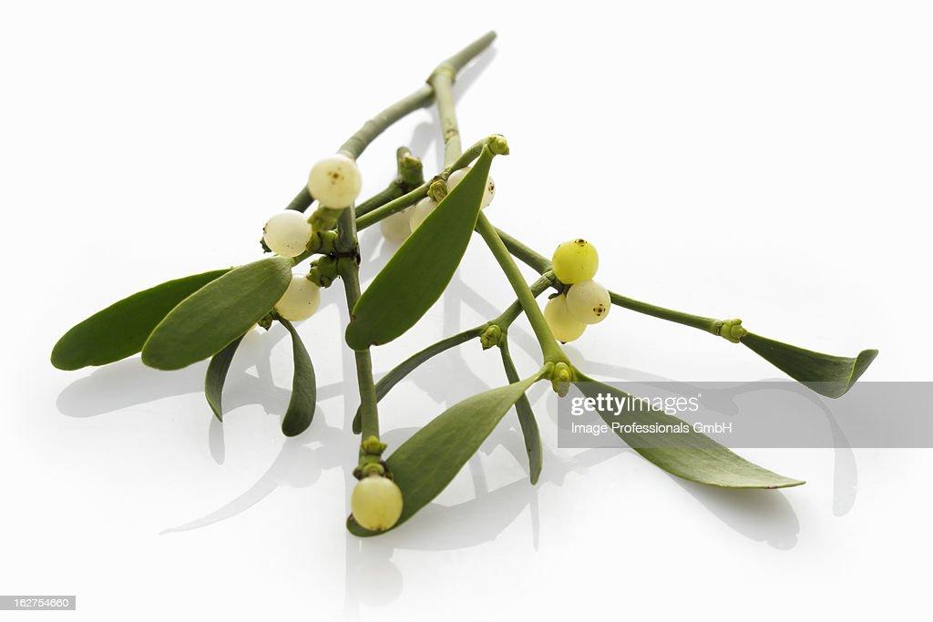 Sprig of mistletoe : Photo