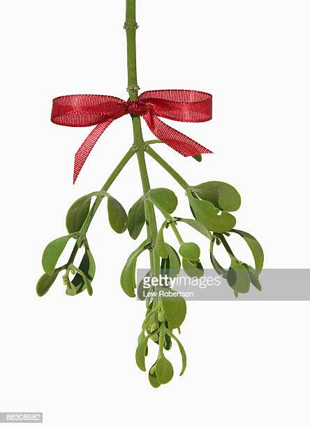 Sprig of mistletoe with red ribbon