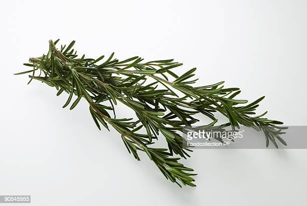 Sprigs of rosemary on white background, close up