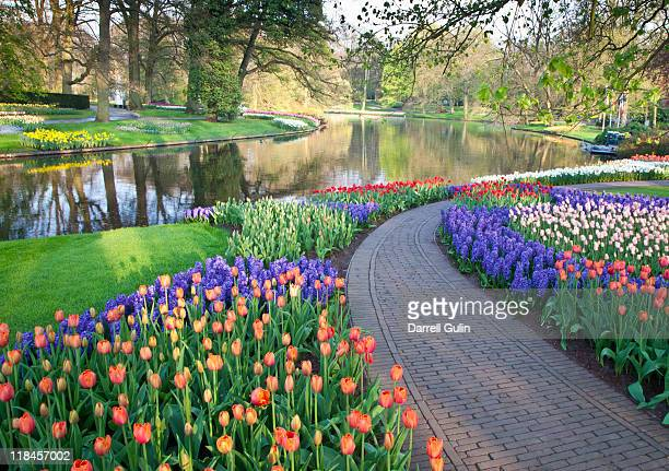 sprigtime keukenhof gardens tulips and hyacinths - keukenhof gardens stock pictures, royalty-free photos & images