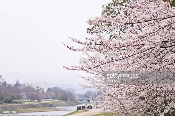 Spring afternoon at Kamogawa