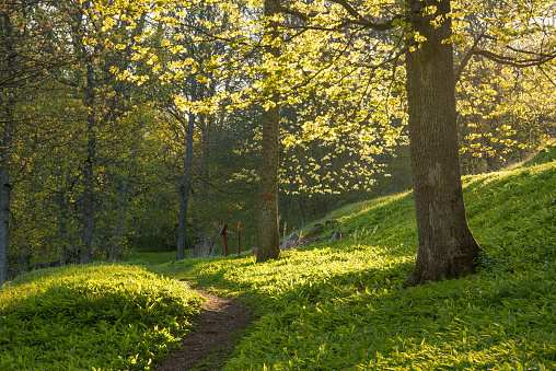 Spring and greenery in parkland with a narrow walkway - gettyimageskorea
