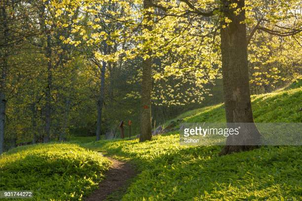 spring and greenery in parkland with a narrow walkway - parkland stock pictures, royalty-free photos & images