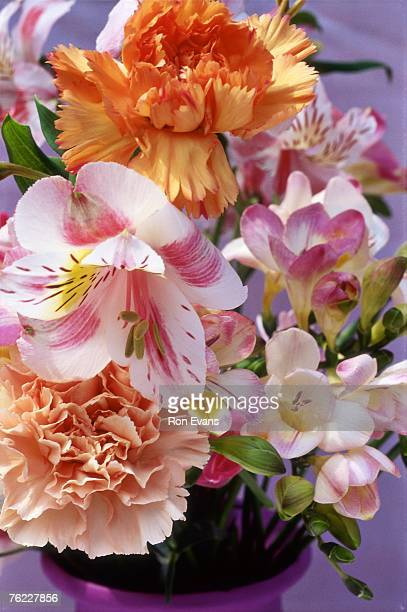 spring arrangement, freesia, alstromeria & carnation (dianthus) in lilac pot, february - alstroemeria stock pictures, royalty-free photos & images