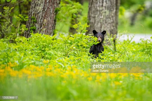 spring arrivals - shenandoah_national_park stock pictures, royalty-free photos & images