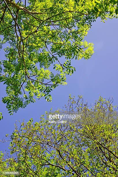 Spring ash and alder leaves