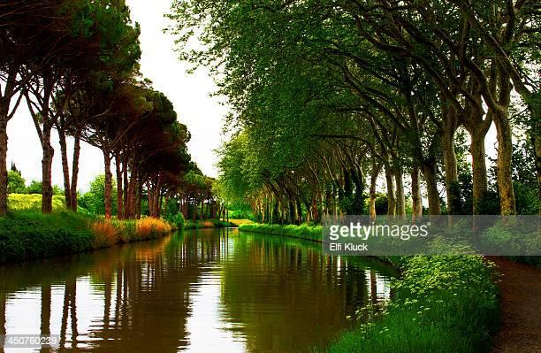 spring at the canal du midi - canal du midi photos et images de collection