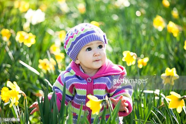 spring baby - daffodils stock photos and pictures