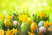 Spring background with Easter eggs in green grass and daffodil flowers.