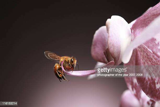 spring bee - pollination stock pictures, royalty-free photos & images