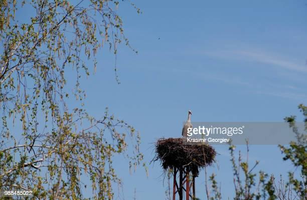 spring bird - krasimir georgiev stock photos and pictures