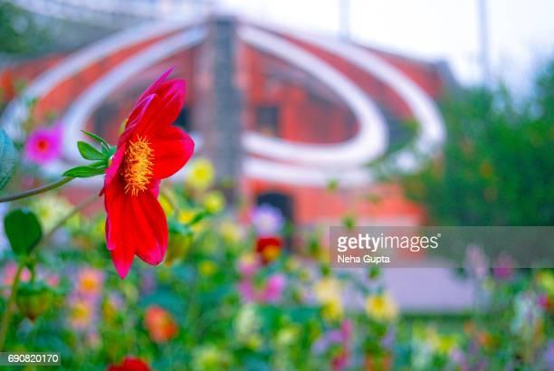 Spring Bloom At Jantar Mantar