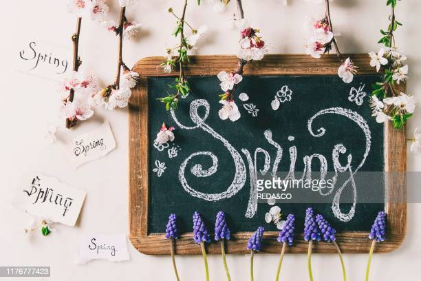 Spring blossom flowers muscari pear and cherry branches Vintage chalkboard with lettering spring and different handwritten notes letters over white...