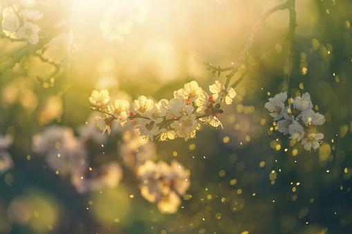 Spring blossom 1138329703