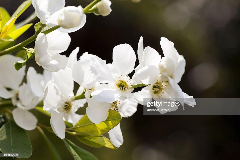 Spring blossom : Foto de stock