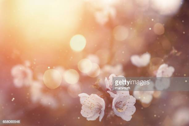 spring blossom - ethereal stock pictures, royalty-free photos & images
