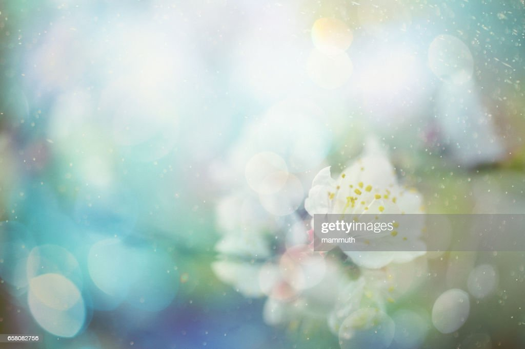 blossom de primavera : Foto de stock