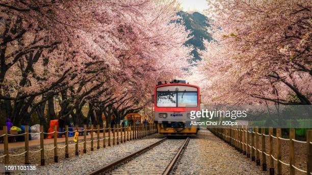 Spring Blossom St