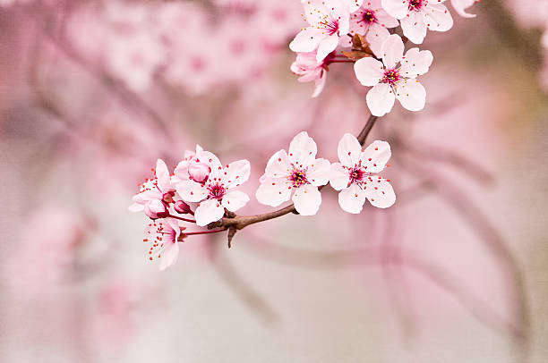 Spring Blossoms Wall Art