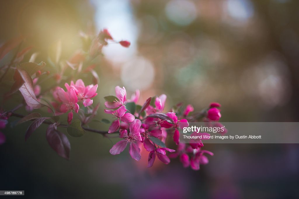 Spring Blossoms : Stock Photo