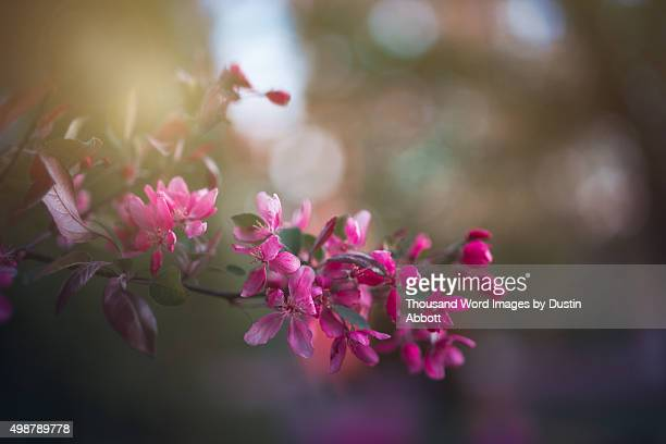 spring blossoms - dustin abbott stock pictures, royalty-free photos & images