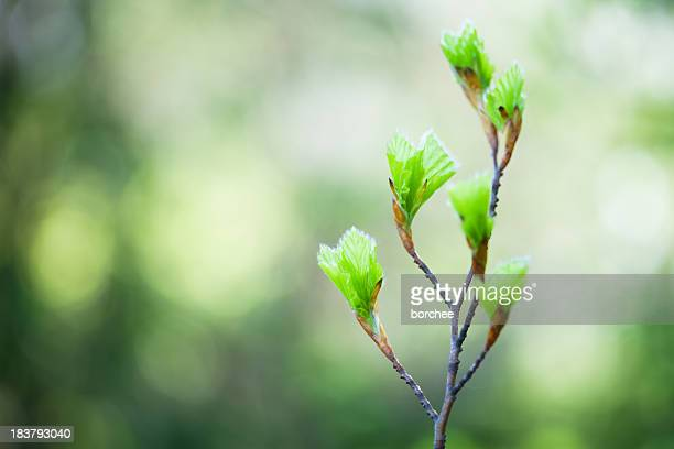 spring buds - bud stock pictures, royalty-free photos & images