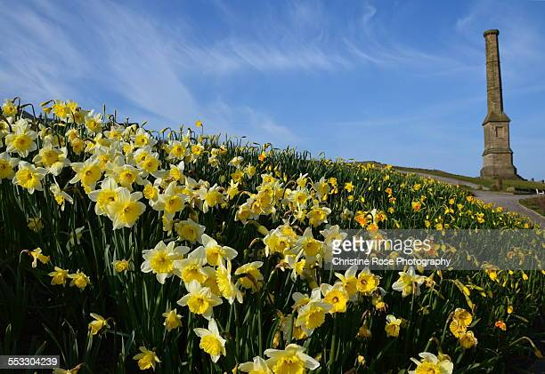 spring bursting - whitehaven cumbria stock pictures, royalty-free photos & images