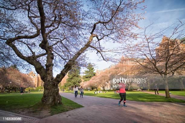ワシントン大学クワッドの春キャンパスモーニング - ワシントン大学 ストックフォトと画像