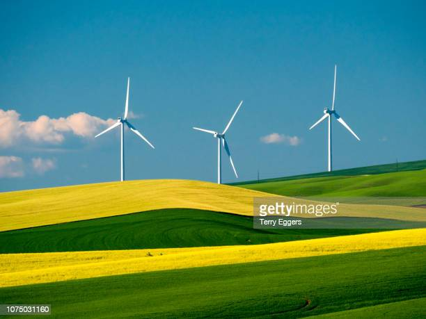 spring canola and wheat fields with wind generators - mill stock pictures, royalty-free photos & images