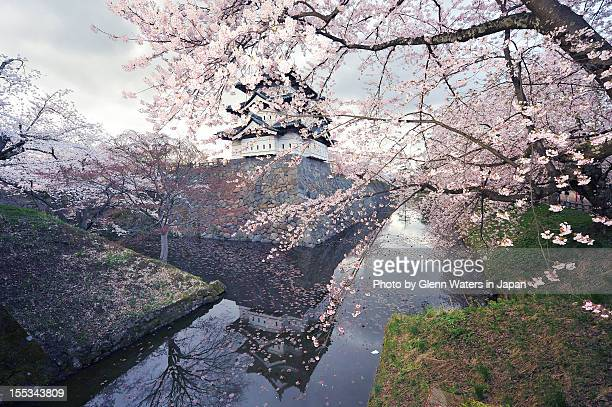 spring castle - hirosaki stock pictures, royalty-free photos & images