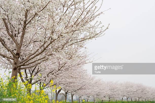 Spring Color 2