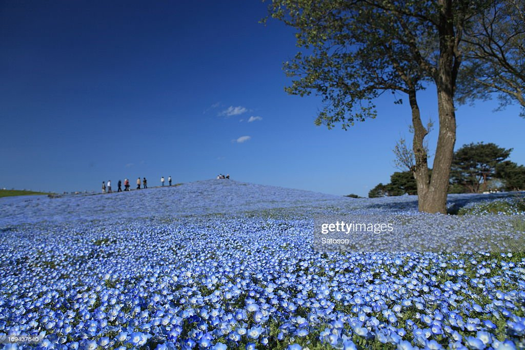 Spring colored in blue : Stock Photo