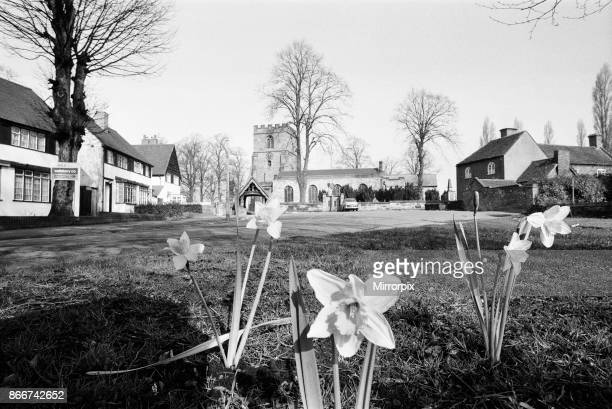 Spring Daffodils bloom on the village green at Kingswinford Staffordshire West Midlands 11th March 1971 Face of Britain 1971 Feature