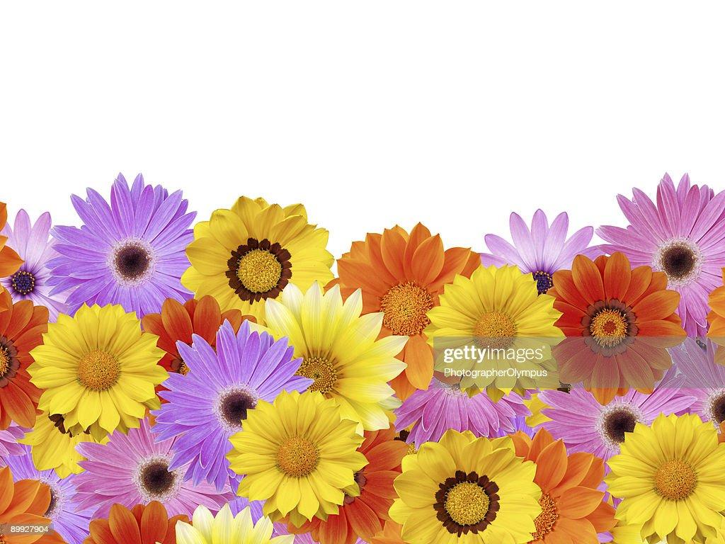 Spring daisy flower frame border stock photo getty images spring daisy flower frame border stock photo izmirmasajfo