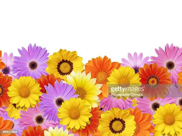 Spring daisy flower frame / border