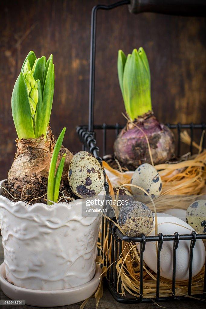 Codorniz decoración de primavera con flores y huevos, y hyacinth : Foto de stock