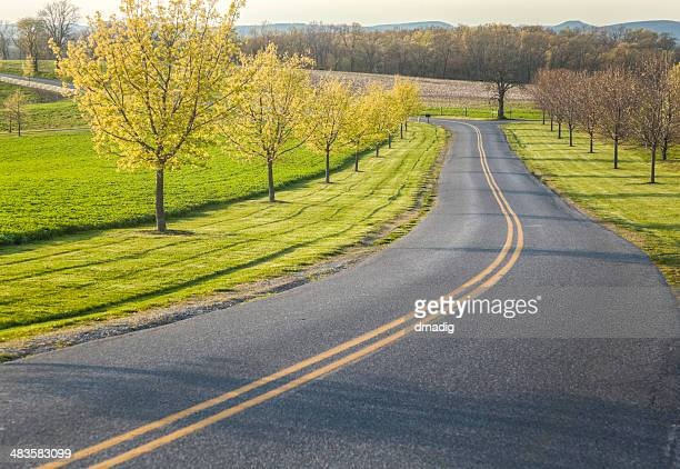 Spring Drive along a Country Lane
