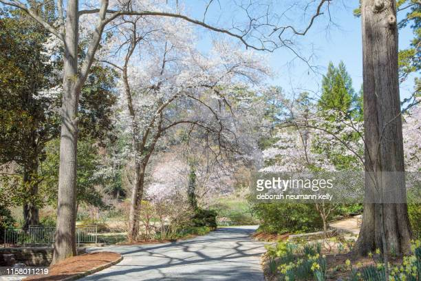 spring duke gardens - duke stock pictures, royalty-free photos & images
