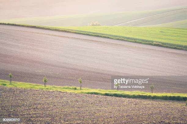 spring field abstract nature background