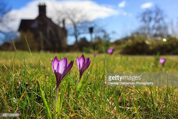 spring field - daniele carotenuto stock pictures, royalty-free photos & images