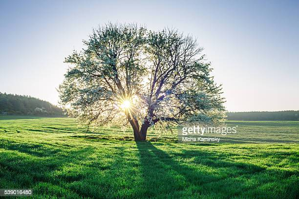 spring field - tree stock pictures, royalty-free photos & images