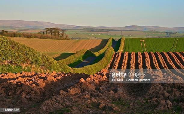 spring fields - hill range stock pictures, royalty-free photos & images