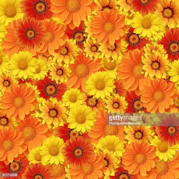 Lit de fleurs de printemps