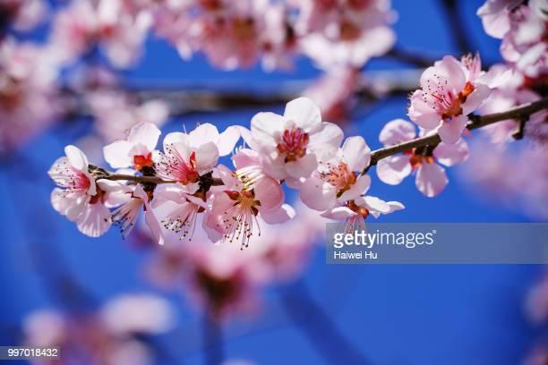 spring flower #1