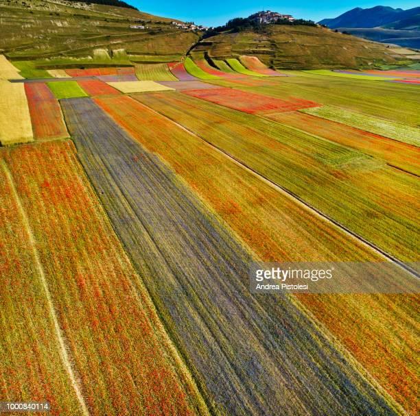 spring flowerbed in castelluccio di norcia, umbria, italy - altopiano foto e immagini stock