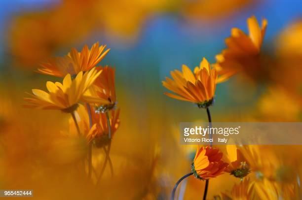 spring flowering - ナマクワランド ストックフォトと画像