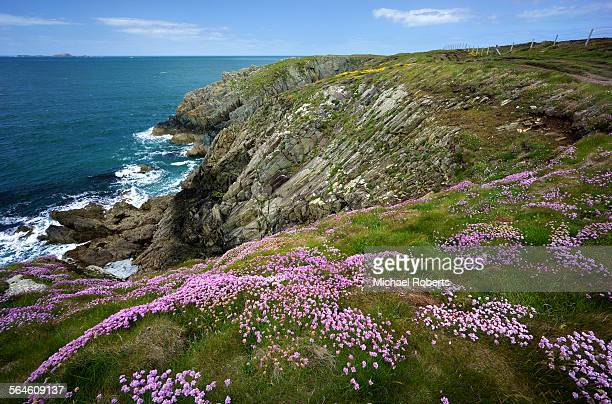 Spring flowers along Pembrokeshire coast path