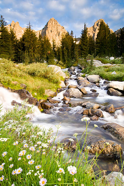 Spring flowers and flowing water below Mount Ritter and Banner, Ansel Adams Wilderness Area, Sierra Nevada, California